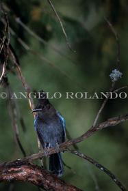 AROLANDO-IMG_AVPB_009